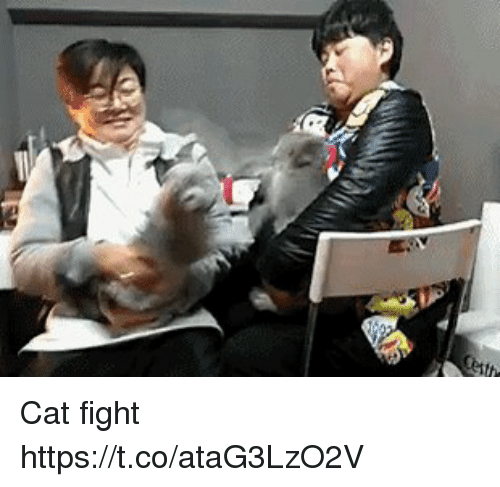 cat fight: Cat fight https://t.co/ataG3LzO2V