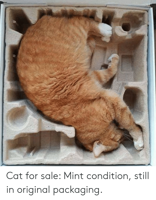 Cat, Mint, and Mint Condition: Cat for sale: Mint condition, still in original packaging.