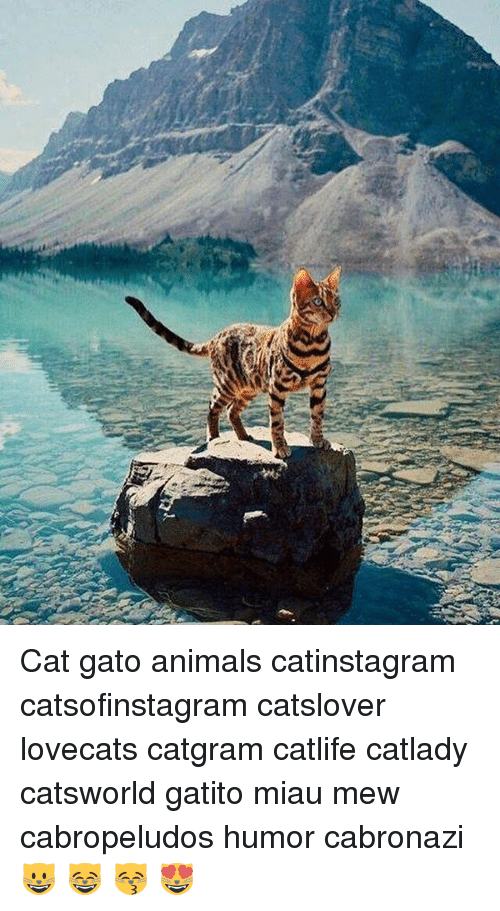 Animals, Cat, and Mew: Cat gato animals catinstagram catsofinstagram catslover lovecats catgram catlife catlady catsworld gatito miau mew cabropeludos humor cabronazi 😺 😸 😽 😻