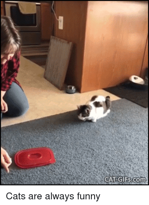 Cats, Funny, and Gifs: CAT:GIFs.com Cats are always funny