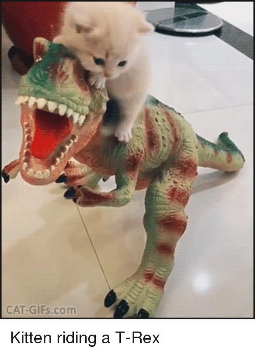 cute baby: CAT-GIFs.com Kitten riding a T-Rex