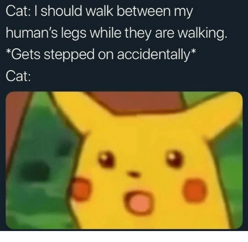 """Cat, They, and Humans: Cat: I should walk between my  human's legs while they are walking.  """"*Gets stepped on accidentally*  Cat:"""