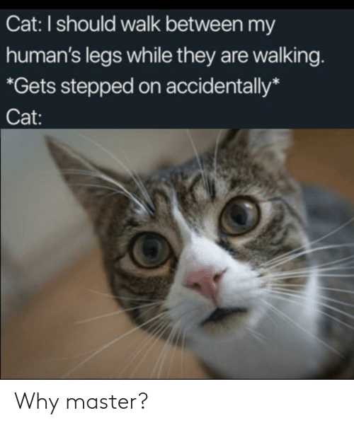 legs: Cat: I should walk between my  human's legs while they are walking.  *Gets stepped on accidentally*  Cat: Why master?