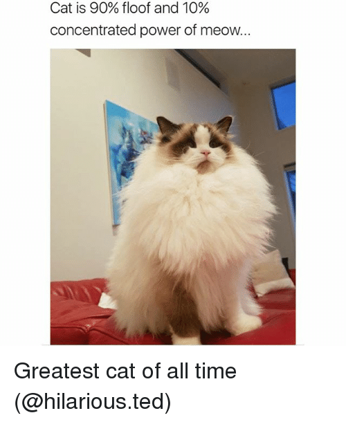 Meowe: Cat is 90% floor and 10%  concentrated power of meow. Greatest cat of all time (@hilarious.ted)