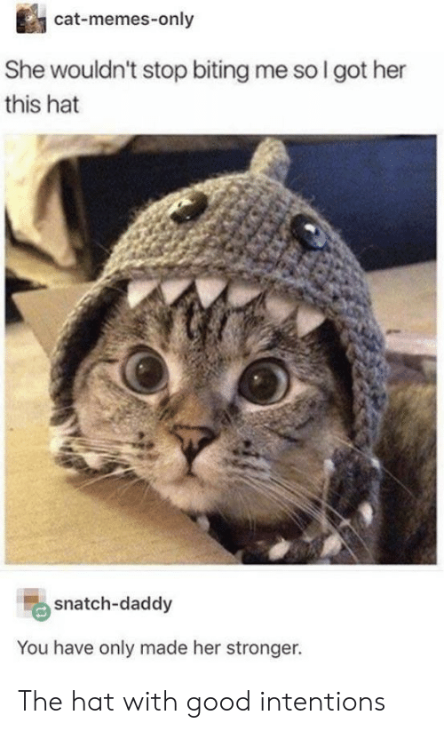 Cat Memes: cat-memes-only  She wouldn't stop biting me so I got her  this hat  snatch-daddy  You have only made her stronger. The hat with good intentions