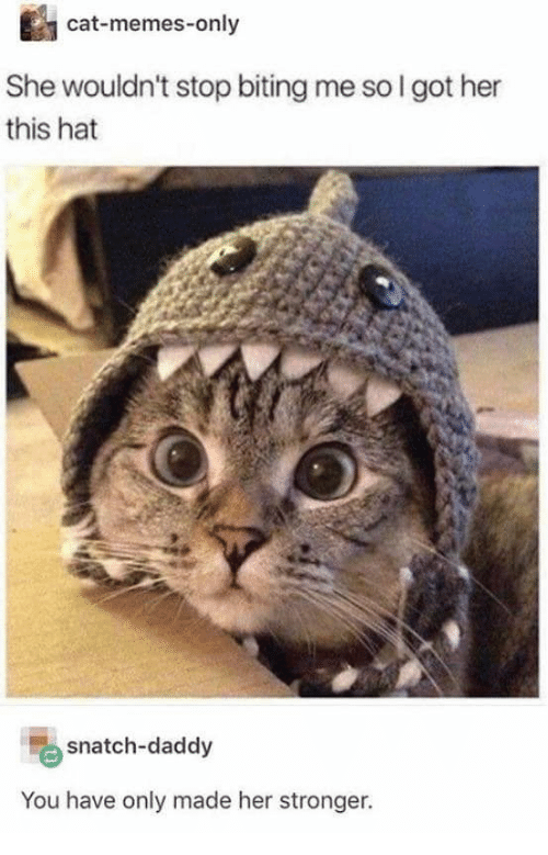 Cat Memes: cat-memes-only  She wouldn't stop biting me so I got her  this hat  snatch-daddy  You have only made her stronger.