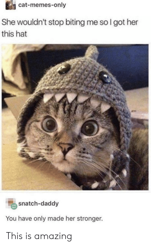 Cat Memes: cat-memes-only  She wouldn't stop biting me so I got her  this hat  snatch-daddy  You have only made her stronger. This is amazing