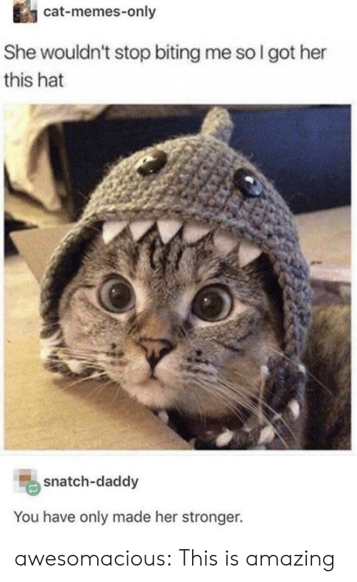 Cat Memes: cat-memes-only  She wouldn't stop biting me so I got her  this hat  snatch-daddy  You have only made her stronger. awesomacious:  This is amazing