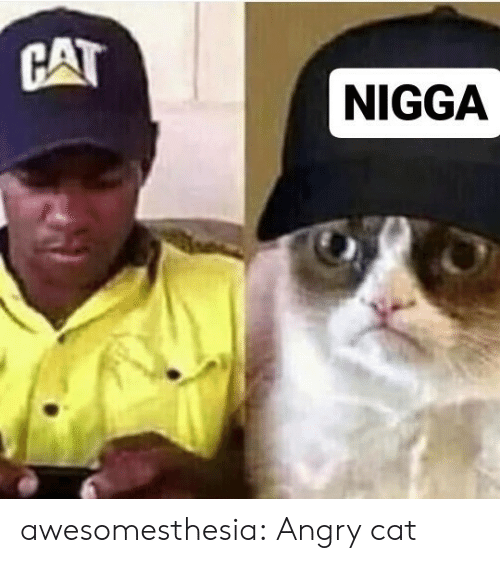 Angry Cat: CAT  NIGGA awesomesthesia:  Angry cat