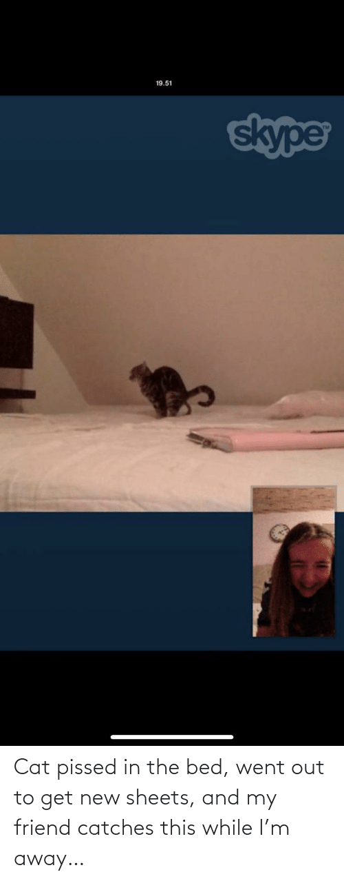 cat: Cat pissed in the bed, went out to get new sheets, and my friend catches this while I'm away…