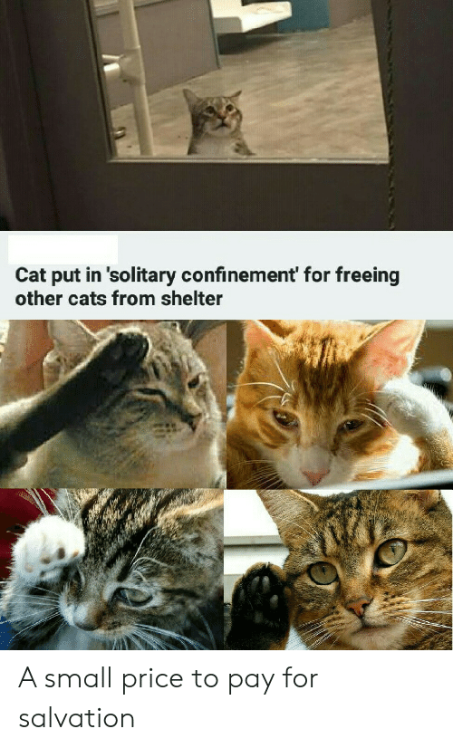 shelter: Cat put in 'solitary confinement' for freeing  other cats from shelter A small price to pay for salvation