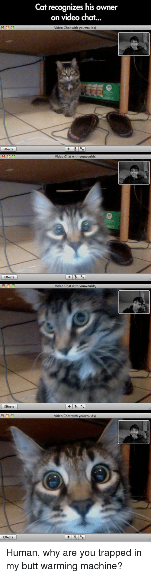 In My Butt: Cat recognizes his owner  on video chat..  Video Chat with youwoulds  Effects  Video Chat with youwoulds  70  Effects  Video Chat with youwouldsj  Effects  Video Chat with youwoulds  Effects Human, why are you trapped in my butt warming machine?
