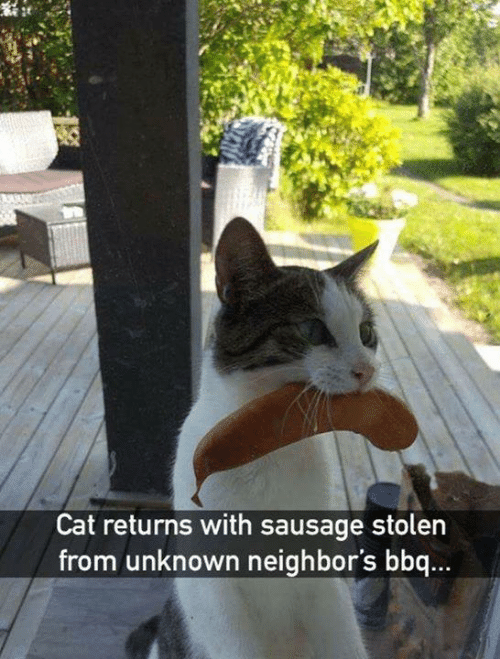 Memes, Neighbors, and 🤖: Cat returns with sausage stolen  from unknown neighbors bbq...