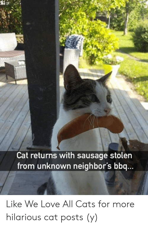 Cats, Love, and Memes: Cat returns with sausage stolen  from unknown neighbor's bbq... Like We Love All Cats for more hilarious cat posts (y)