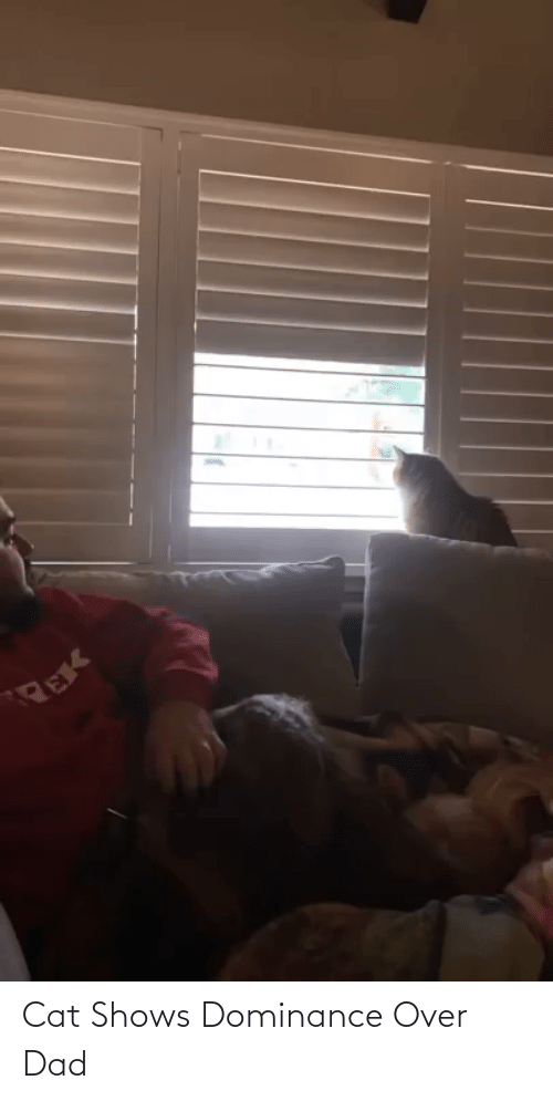 Aww Memes: Cat Shows Dominance Over Dad