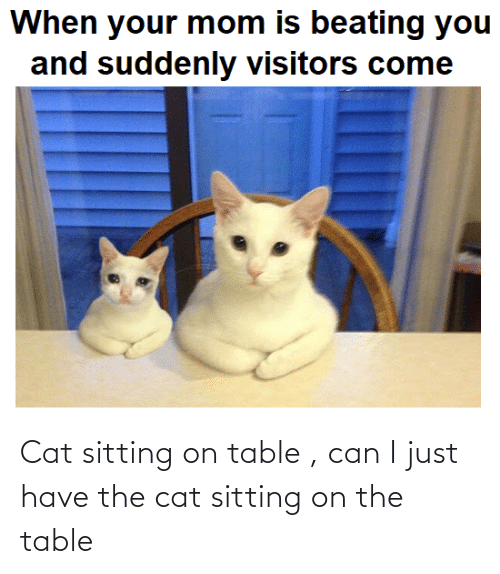 On The Table: Cat sitting on table , can I just have the cat sitting on the table
