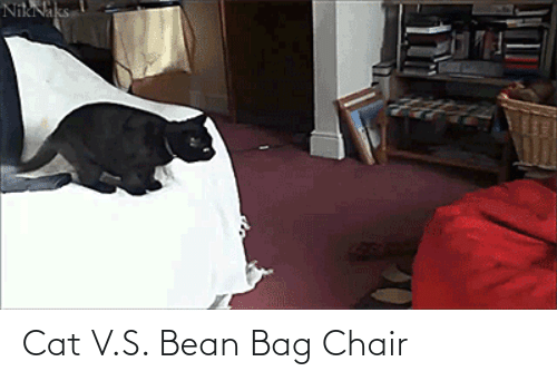 V: Cat V.S. Bean Bag Chair