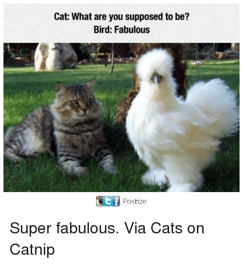 Cats, Memes, and 🤖: Cat: What are you supposed to be?  Bird: Fabulous  GEf Postize Super fabulous. Via Cats on Catnip