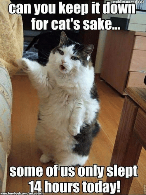 Cats, Facebook, and Memes: cataddictsanony-mouse  can you keep it down  for cat's sake...  some of us only slept  14 hours today!  www.facebook.com/cat.addids  ROFBO