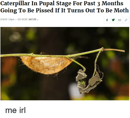 Nature, Irl, and Me IRL: Caterpillar In Pupal Stage For Past 3 Months  Going To Be Pissed If It Turns Out To Be Moth  8/14/18 1:34pm SEE MORE: NATURE me irl