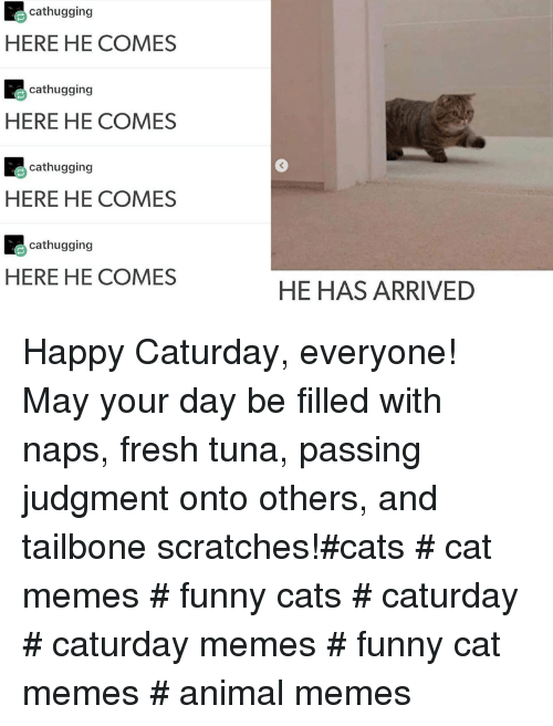 Cats, Caturday, and Fresh: cathugging  HERE HE COMES  cathugging  HERE HE COMES  cathugging  3  HERE HE COMES  cathugging  HERE HE COMES  HE HAS ARRIVED Happy Caturday, everyone! May your day be filled with naps, fresh tuna, passing judgment onto others, and tailbone scratches!#cats # cat memes # funny cats # caturday # caturday memes # funny cat memes # animal memes