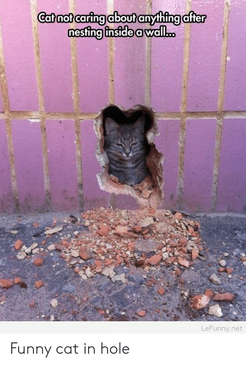 Lefunny: Catnot caring about anything after  estina inside a wall...  LeFunny.net Funny cat in hole