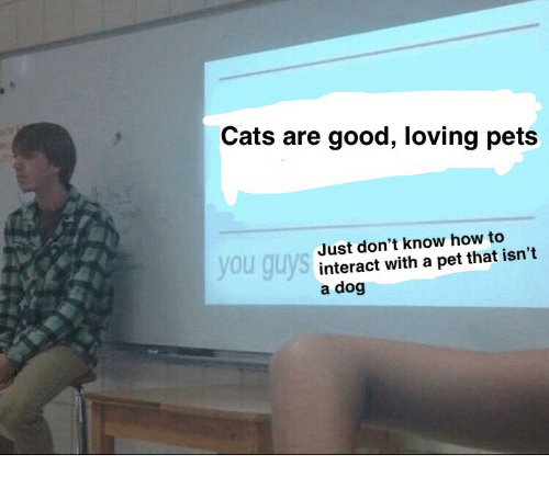 Cats, Pets, and Good: Cats are good, loving pets  Just don't know how to  interact with a pet that isn't  a dog  you guys