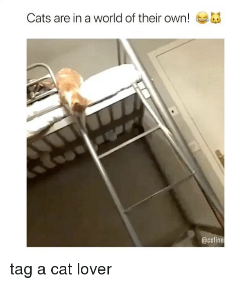 Cats, World, and Girl Memes: Cats are in a world of their own!  @coline tag a cat lover