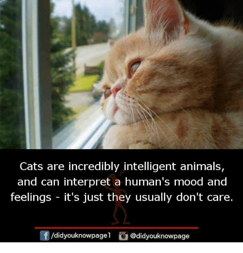 Animals, Cats, and Memes: Cats are incredibly intelligent animals,  and can interpret a human's mood and  feelings -it's just they usually don't care.  /didyouknowpagel @didyouknowpage