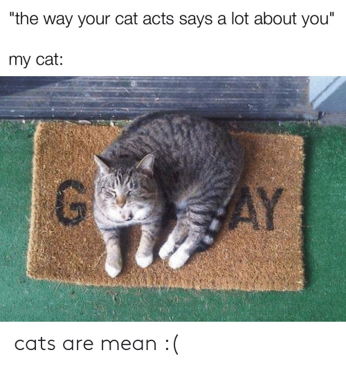 Cats Are: cats are mean :(
