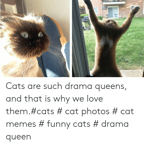 Cat Memes Funny: Cats are such drama queens, and that is why we love them.#cats # cat photos # cat memes # funny cats # drama queen