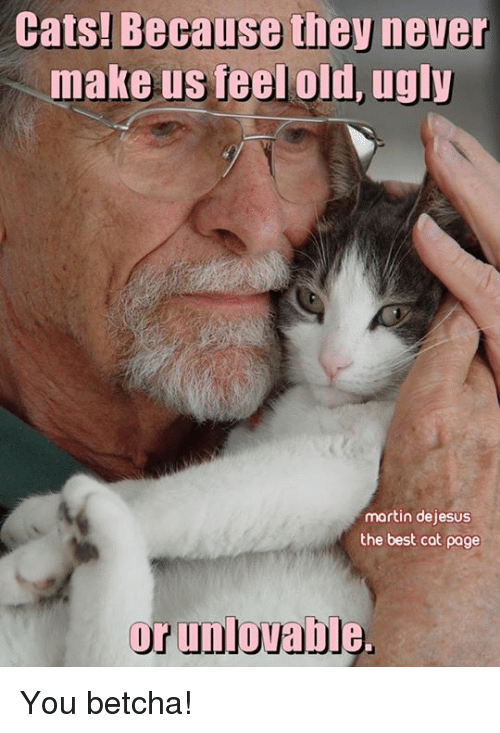 Martin, Memes, and Ugly: Cats! Because the never  make us feel old, ugly  martin dejesus  the best cat page  or unlovable. You betcha!