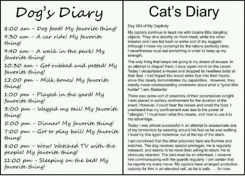 "Contemption: Cat's Diary  Dog's Diary  Day 983 of My Captivity  8:00 am Dog food My favorite thing  My captors continue to taunt me with bizarre little dangling  7:30 am A car ride! My favorite  objects. They dine lavishly on fresh meat, while the other  inmates and I are fed hash or some sort of dry nuggets  Although I make my contempt for the rations perfectly clear  7:40 am A walk in the park My  l nevertheless must eat something in order to keep up my  strength.  favorite thing!  The only thing that keeps me going is my dream of escape. In  10:30 am Got rubbed and petted My  an to them, I once again vomit on the carpet  Today decapitated a mouse and dropped its headless body at  favorite thing!  their feet. Ihad hoped this would strike fear into their hearts  12:00 pm Milk bones My favorite  since this clearly demonstrates my capabilities. However, they  merely made condescending comments about what a ""good little  hunter"" I am, Bastards!  1:00 pm Played in the yard My  There was some sort of assembly of their accomplices tonight.  favorite thing!  I was placed in solitary confinement for the duration of the  event. However, could hear the noises and smell the food. I  3:00 pm Wagged my tail My favorite  overheard that my confinement was due to the power of  allergies."" must learn what this means, and how to use it to  s oo pm my advantage  successful in an attempt to assassinate one  Dinner! My favorite thing.  Today was almost of my tormentors by weaving around his feet as he was walking  7:00 pm Got to play ball My favorite  must try this again tomorrow, but at the top of the stairs  am convinced that the other prisoners here are flunkies and  8:00 pm Wow! Watched TV with the  snitches. The dog receives special privileges. He is regularly  released, and seems to be more than willing to return. He is  people' My favorite thing!  obviously retarded. The bird must be an informant. I observe  11:00 pm Sleeping on the bed My  him communicating with the guards regularly, I am certain that  captors have arranged protective  cell  so he is safe for now.  custody for him in an elevated favorite thing!"