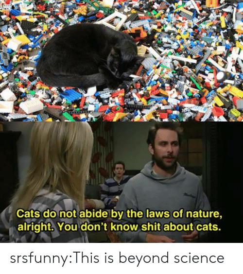 Cats, Shit, and Tumblr: Cats do not abide by the laws of nature,  alright. You don't know shit about cats. srsfunny:This is beyond science