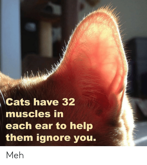 Cats, Meh, and Help: Cats have 32  muscles in  each ear to help  them ignore you. Meh