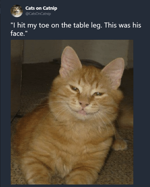 "Cats, Memes, and 🤖: Cats on Catnip  @CatsOnCatnip  ""I hit my toe on the table leg. This was his  face."""