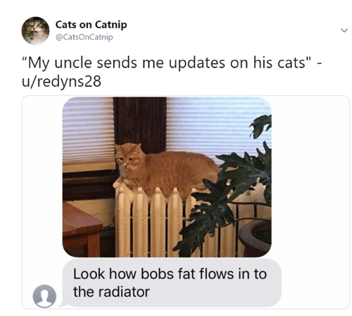 "catnip: Cats on Catnip  @CatsOnCatnip  ""My uncle sends me updates on his cats""  u/redyns28  Look how bobs fat flows in to  the radiator"