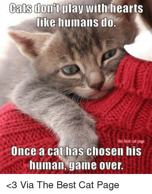 Cats, Memes, and Best: Cats play with hearts  like humans do.  the best cat page  Once a cat has chosen his  human, game over. <3 Via The Best Cat Page