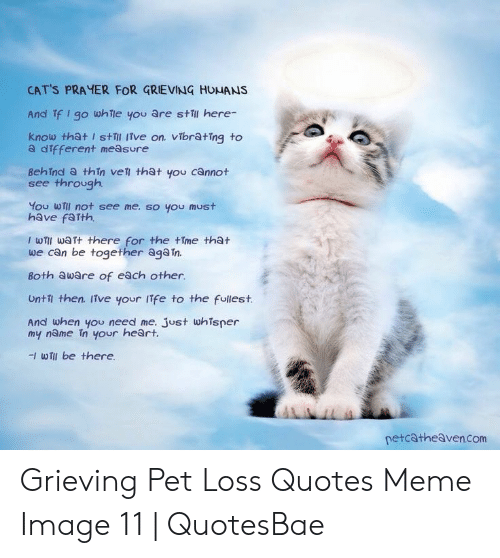 🐣 25+ Best Memes About Pet Loss Quotes | Pet Loss Quotes Memes
