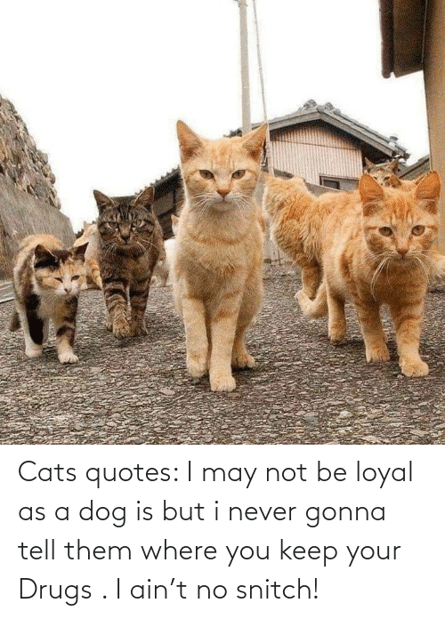 I Never: Cats quotes: I may not be loyal as a dog is but i never gonna tell them where you keep your Drugs . I ain't no snitch!