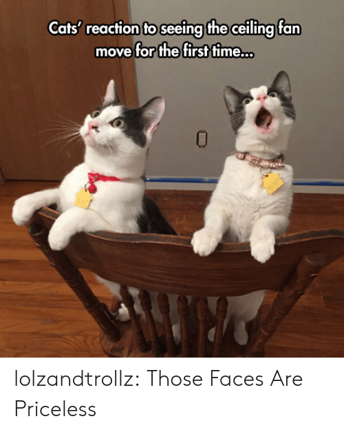 Cats, Tumblr, and Blog: Cats' reaction to seeing the ceiling fan  move for the first time.. lolzandtrollz:  Those Faces Are Priceless