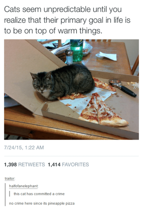 Criming: Cats seem unpredictable until you  realize that their primary goal in life is  to be on top of warm things.  /24/15, 1:22 AM  1,398 RETWEETS 1,414 FAVORITES  halfofanelephant  this cat has committed a crime  no crime here since its pineapple pizza