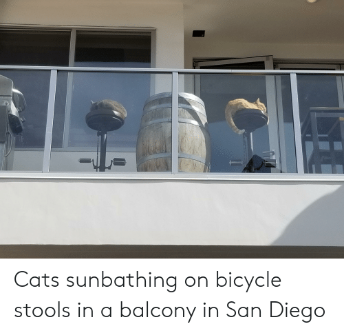 Cats, Bicycle, and San Diego: Cats sunbathing on bicycle stools in a balcony in San Diego