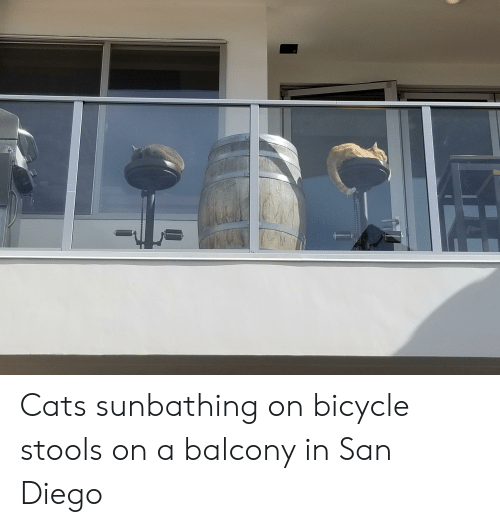 Cats, Bicycle, and San Diego: Cats sunbathing on bicycle stools on a balcony in San Diego
