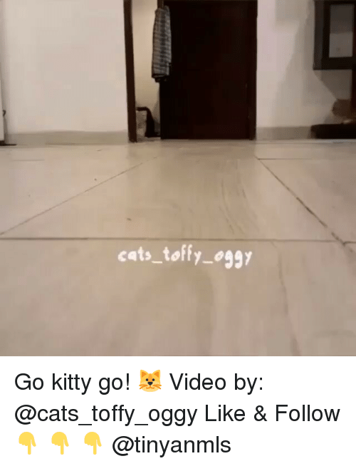 kittie: cats toffy oggy Go kitty go! 🐱 Video by: @cats_toffy_oggy Like & Follow 👇 👇 👇 @tinyanmls