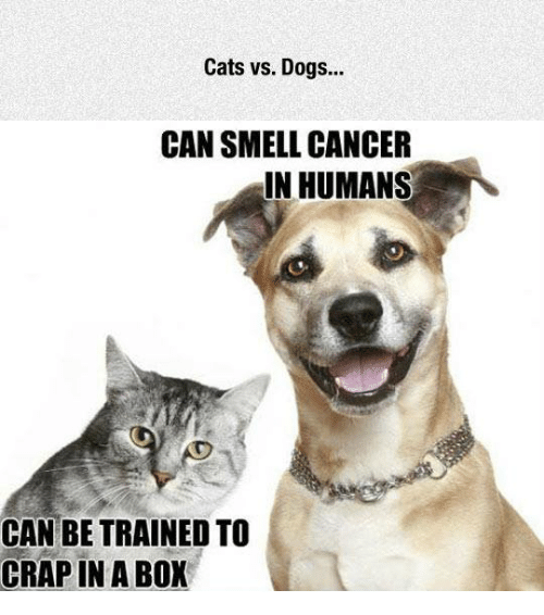 Cats, Dank, and Dogs: Cats vs. Dogs...  CAN SMELL CANCER  IN HUMANS  CAN BE TRAINED TO  CRAP IN A BOX