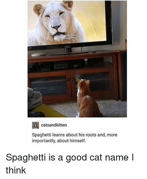 Memes, Spaghetti, and 🤖: catsandkitten  Spaghetti learns about his roots and, more  importantly, about himself. Spaghetti is a good cat name I think