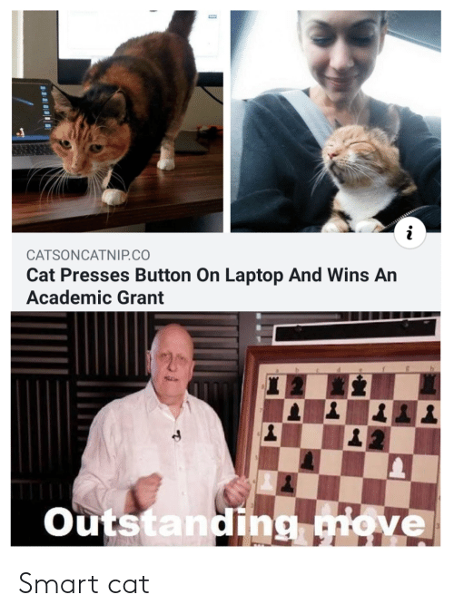 Smart Cat: CATSONCATNIP.CO  Cat Presses Button On Laptop And Wins An  Academic Grant  Outstanding move Smart cat