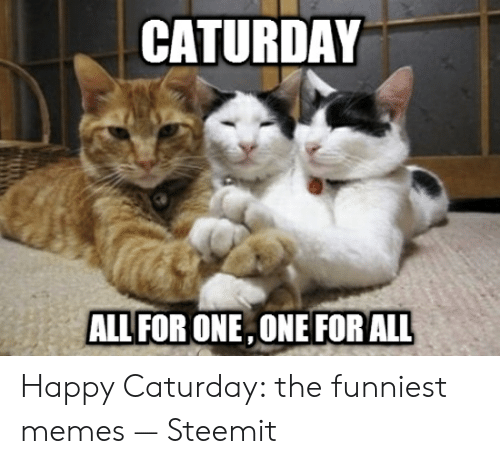 Caturday Meme: CATURDAY  ALL FOR ONE,ONE FOR ALL Happy Caturday: the funniest memes — Steemit