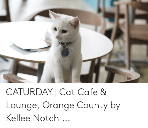 Caturday Cat: CATURDAY | Cat Cafe & Lounge, Orange County by Kellee Notch ...
